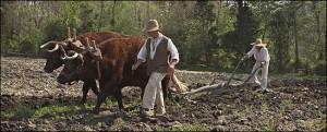 colonial-farmers